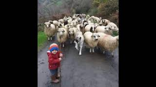 Relax in the forest / Toddler Shepherd and Sheeps