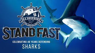 Stand Fast: 40 Years Defending Sharks