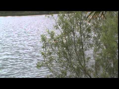 Part 1 of my open water 1-mile butterfly swim