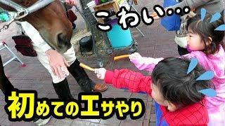 【ビビりは誰だ?】 いとちゃんが大好きな馬に人参をあげる体験に遭遇!...