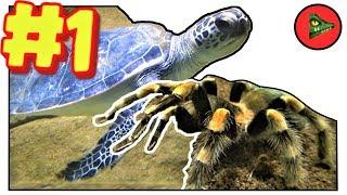 ХОРОШЕГО ПОНЕМНОГУ (#1) - маскировка хамелеона, третье веко крокодила, морская черепаха, тарантул.