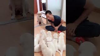 What happen when you hit puppies in front of their mom