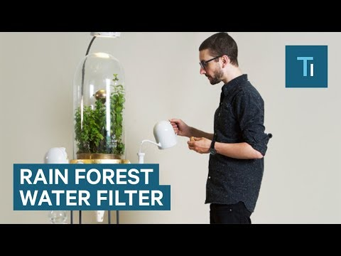 Mini Rain Forest Filters Water