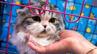 Выставка кошек 2017 Бишкек, ТЦ Beta Stores
