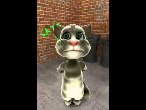 ibrahim tatlises semmamme'okuyan mahmut umit akyol''cevirme yapan kedi