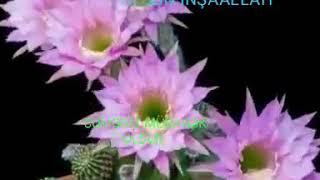 Cumeye Aid Video Youtube