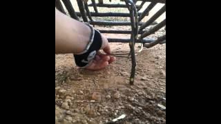 como armar uma arapuca