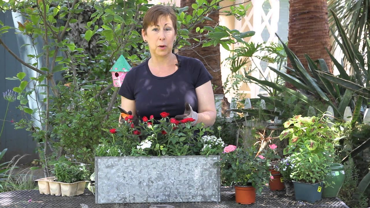 How To Prepare Mini Roses For Winter Garden Space Youtube