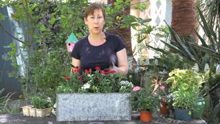 How to Prepare Mini Roses for Winter : Garden Space