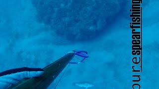 "Deep spearfishing with Euro-African Champion -Pure Spearfishing Ep.11-""Come with me - Part ΙI"""
