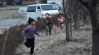 柴犬タロウと家族の日記。 みんなでかけっこ。 Shiba inu.