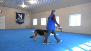 Diesel (german Shepherd) Video Of A Trained Dog