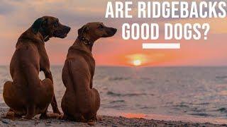 Are Rhodesian Ridgebacks Good Dogs?