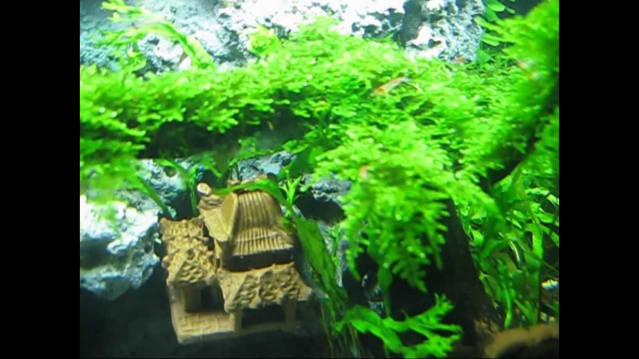 Aquascape - Taiwan Moss Tree - My Beauty Aqua Bonsai - YouTube
