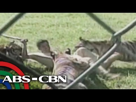 RealiTV: Tiger attack in Batangas