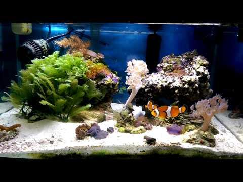 Fluval edge 6 gallon saltwater  reef tank