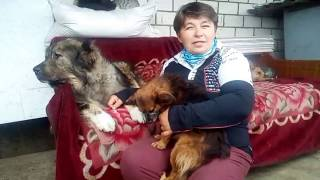 Характер собаки: кавказская овчарка. Кавказская овчарка характеристика породы.