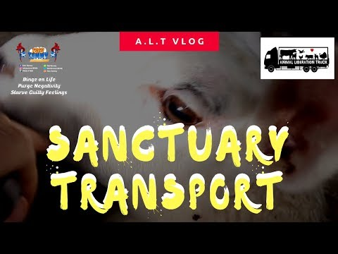 TRANSPORTING LAMBS WITH THE ANIMAL LIBERATION TRUCK