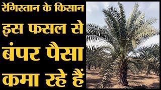 3000 रुपये किलो बिक रही है Barmer के खजूर।Rajasthan election: 2018