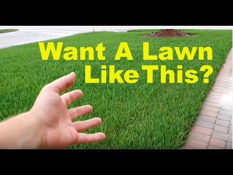 How To Fix An Ugly Lawn | For Beginners - How To Fix An Ugly Lawn For Beginners - YouTube