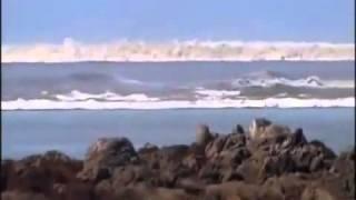 Цунами в Тайланде!!! Редкие кадры.(Видно как приближается волна и потом все сносит на своем пути., 2014-11-26T08:12:50.000Z)