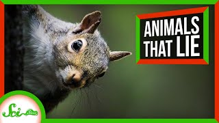 7 Animals That Can't Be Trusted