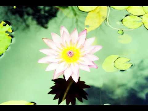 Om Mani Padme Hum (Avalokiteśvara Bodhisattva)