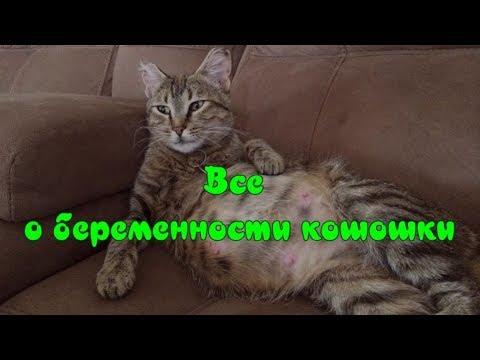 ВСЕ О БЕРЕМЕННОСТИ КОШКИ Уход за кошкой ALL ABOUT CAT PREGNANCY Caring for a cat