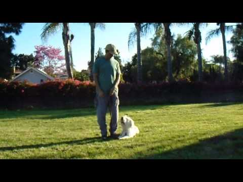 sirius-k9-academy-intermediate-obedience-test-exercise---hand-signals-@-side