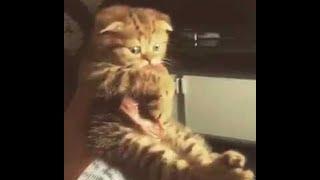 Kitten Clings to a Beef Steak