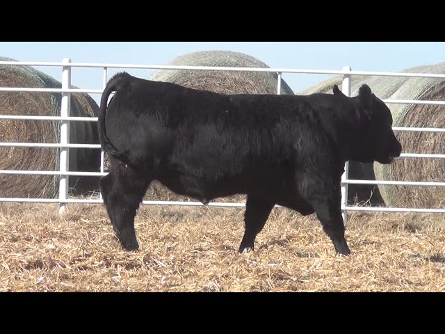 Express Ranches Lot 352