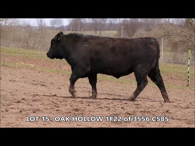 Oak Hollow Lot 15