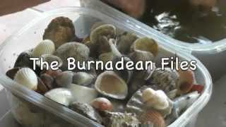 The Burnadean Files - Episode 5 - Seashells