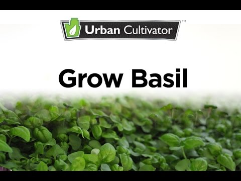 How To Grow Basil Indoors | Urban Cultivator - YouTube