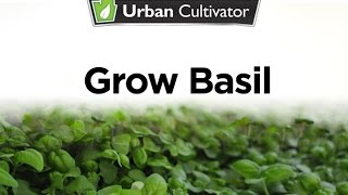 How To Grow Basil Indoors | Urban Cultivator