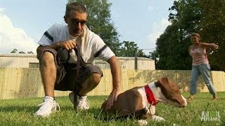 A Family's Road to Recovery, New Home for One Pup | Pit Bulls and Parolees