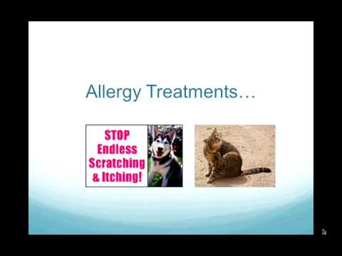 Dog Itching, Dog Food Allergies, Cats with IBD:   Diet For Cats and Dogs with Allergies