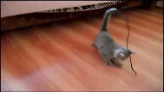 Кошка и шнурок / Cat and lace