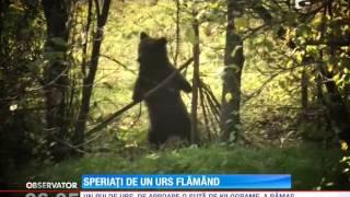 Speriați de un urs flămând