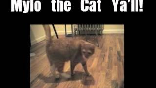 Shortest Video on Youtube Part 9
