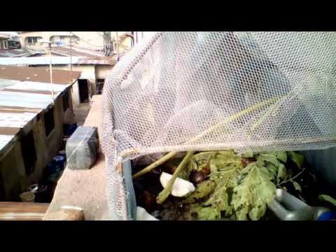 Backyard Snail farming Biz. MULTIPLE FOLDS INTEGRATED