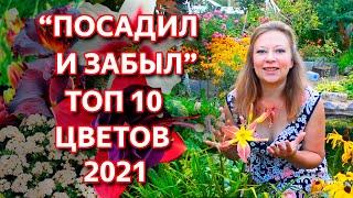 NEW! Неприхотливые цветы для сада. Лучшие многолетники. Лучшие однолетние цветы. Обзор 2021.