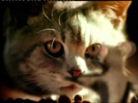 Whiskas - Iklan (2002)