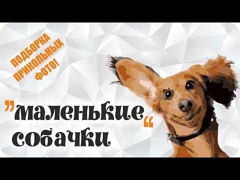 самые смешные фото собак