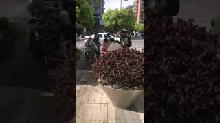 chinese girl fined by traffic police
