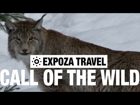 Call Of The Wild Vacation Travel Video Guide
