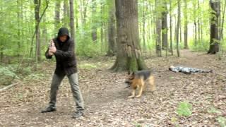 """Лорд. Пёс-полицейский. Съёмки серии """"Страховка жизни"""""""