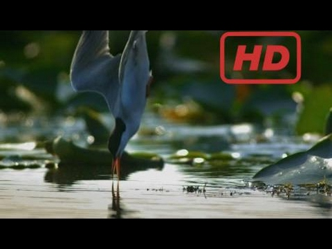 Documentary Danube - Europe's Amazon | Forest, Flood And Frost 2/2 [Hd]