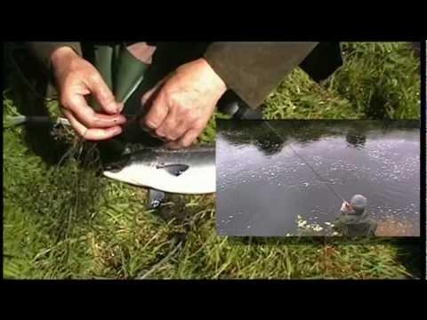 Owenea River Salmon; Where To Fish In Ireland