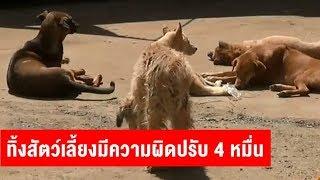 เตือนคนปล่อยหมาแมว เข้าข่ายผิด พ.ร.บ.สัตว์ เจอโทษปรับ 4 หมื่น